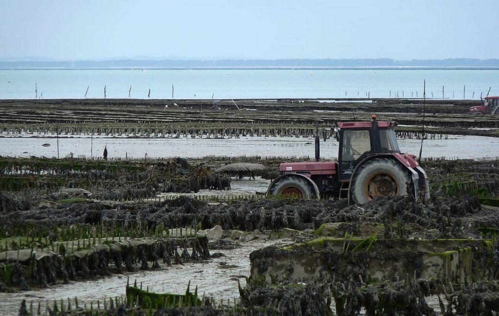 E' piacevole osservare gli allevamenti in fermento nella baia di cancale. Ovviamente questo è possibile quando la marea Si ritira, permettendo ai trattori di scendere sulla sabbia per raccogliere le ostriche.