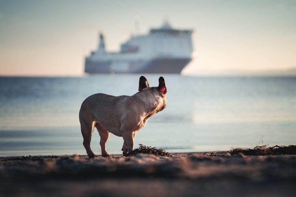 viaggiare con il cane in sicilia, trevaligie