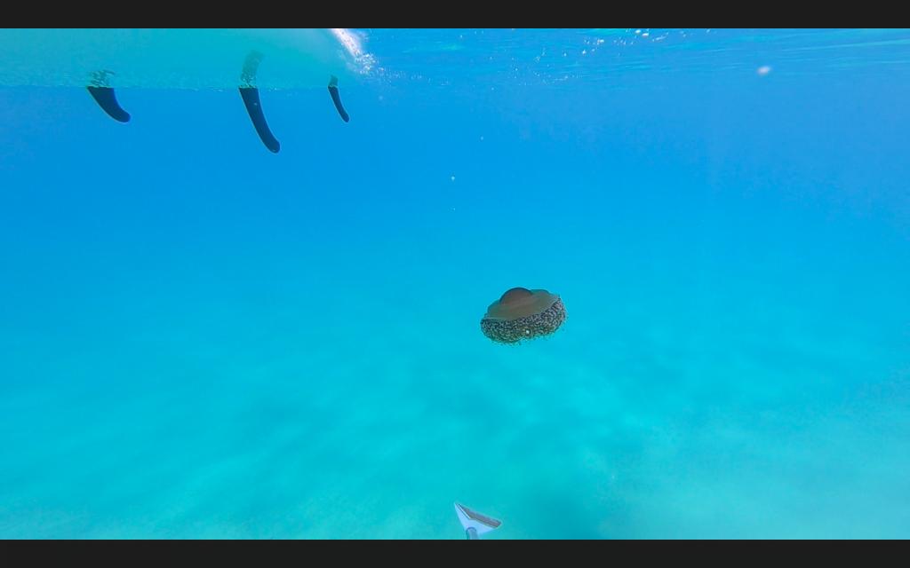 Praticando Sup è possibile entrare a stretto contatto con l'acqua e le numerose specie che ospita.