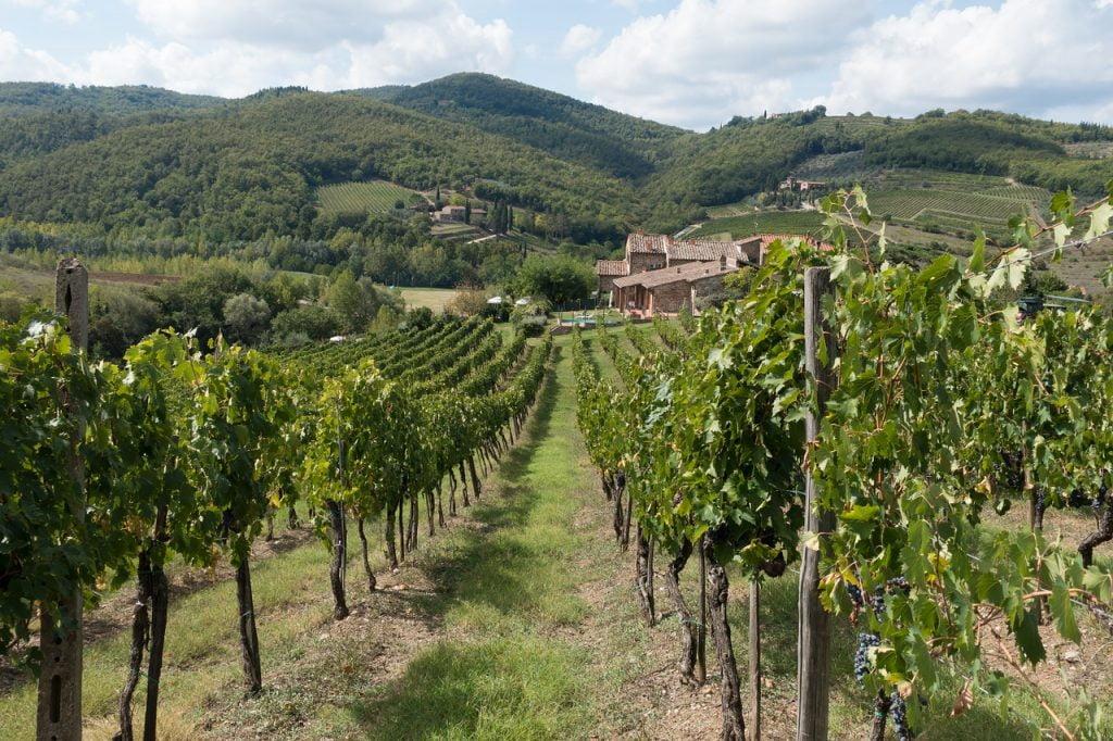 Il Chianti Classico è una delle eccellenze italiane più esportate nel mondo, e viene prodotto nei territori di Greve in Chianti.