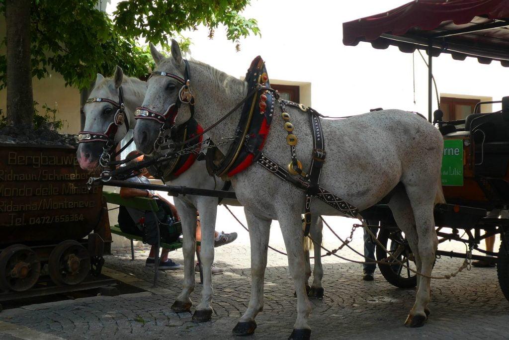 Molto romantica, ma anche divertente da fare con i bambini, è una gita in carrozza nel centro storico di Vipiteno.