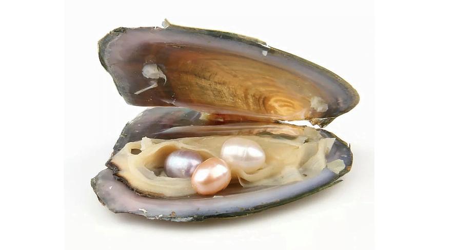 TraveLove crea gioielli originali e unici, come la preziosa ostrica contenente una perla meravigliosa.