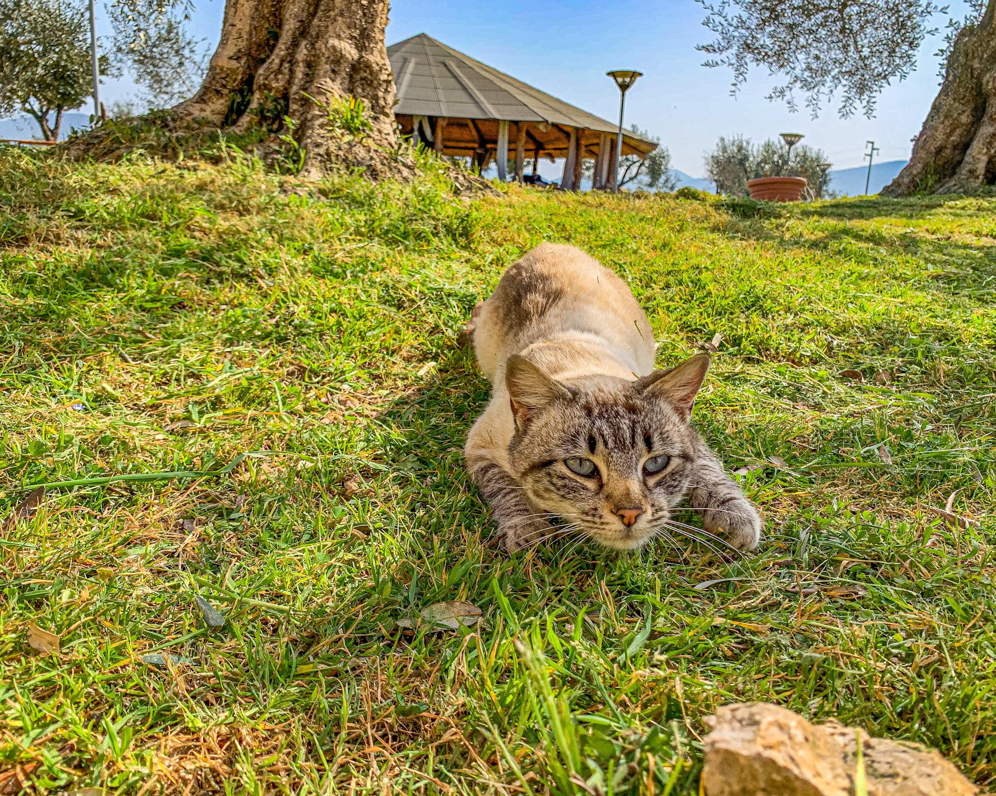 Tra le fattorie didattiche del Lazio trovi la Tenuta di Davide, un agrifattoria dove passare bellissime giornate all'aria aperta, tra playground e animali da cortile.