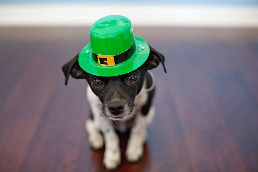 Per celebrare degnamente la festa di San Patrizio, come detto, non può mancare il colore verde. Non esiste alcun dress code, ognuno può indossare ciò che preferisce.