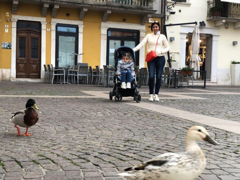 E' facile imbattersi in oche e cigni che passeggiano nel centro storico di Peschiera del Garda. Sono abituati alle persone e i bambini Si divertiranno un mondo a dar loro del cibo.