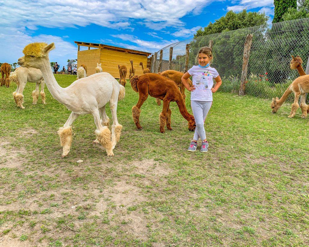 I piani degli alpaca. il meraviglioso parco della maremma tosco laziale, in provincia di Viterbo. Attività con i bambini da fare nel lazio.