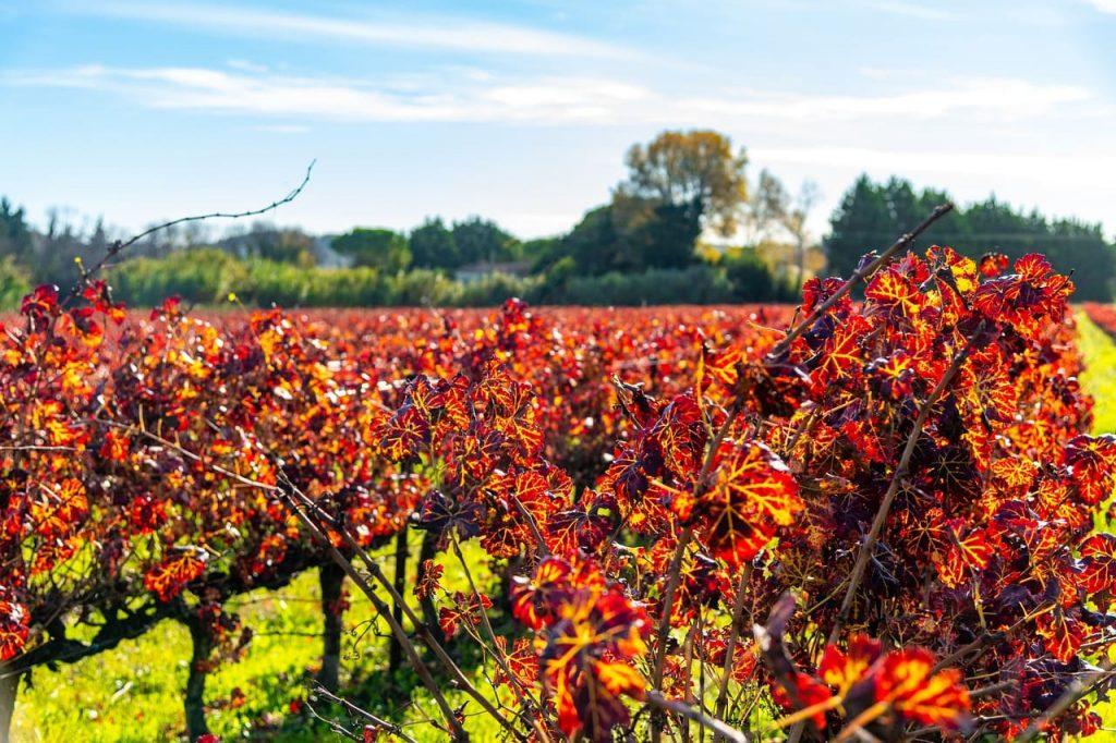 viaggiare on the road in italia in autunno